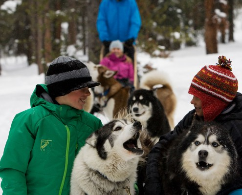 People Dog Sledding