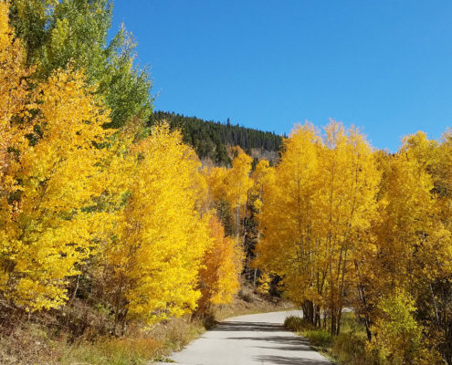 Fall leaves in Breckenridge